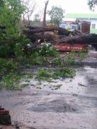 पढि़ए, तेज आंधी-तूफान से ट्रांसफार्मर पर गिरा पेड़, 300 घरों की लाइन बंद
