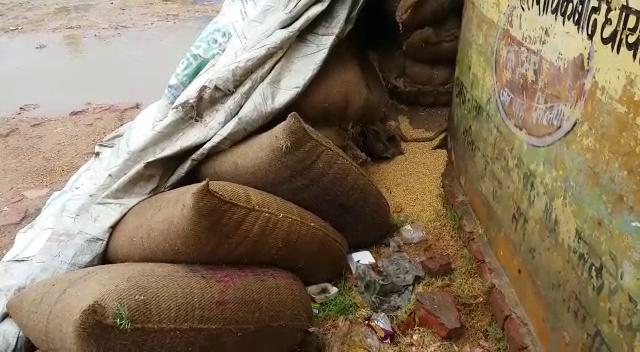 लापरवाही: किसानों से खरीदा गया हजारों क्विंटल गेहूं बरसात में भींगा
