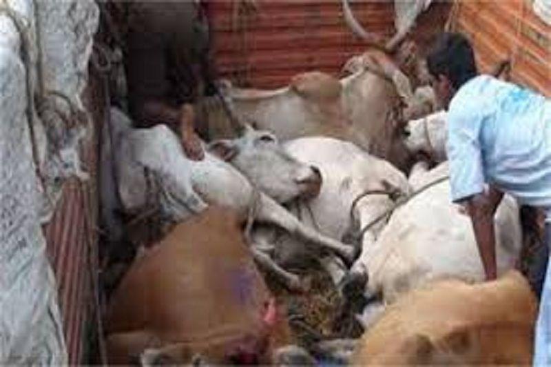 जिले में पशु तस्करी का खुलासा, चार तस्कर गिरफ्तार