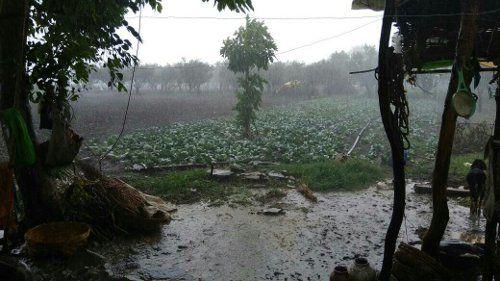 MONSOON CAME : तेज हवाएं चलने के साथ झमाझम बारिश
