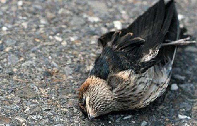 भारत की इस रहस्यमयी जगह के बारे में शायद आपको न हो पता, यहां पक्षी करते हैं सुसाइड