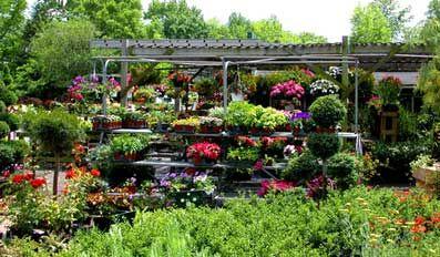 10 लाख का ग्रीन हाउस मिलेंगे कई तरह के पौधे
