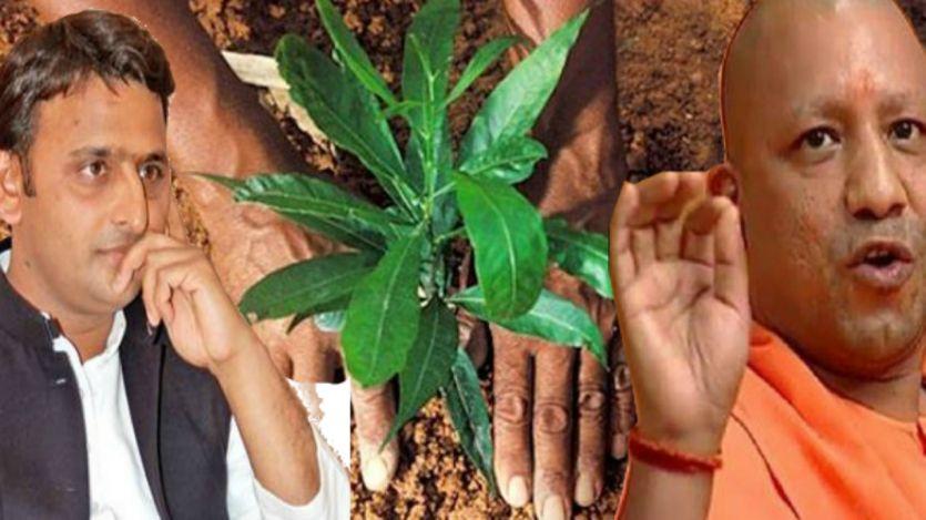 अखिलेश सरकार से एक करोड़ ज्यादा पौधे लगाएगी योगी सरकार, किसानों से लेगी मदद