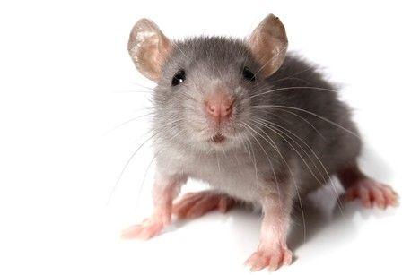 LIVE VIDEO चूहा पहुंचा रिजर्वेशन कराने, खबर पढ़ें कहां जाना है इसे