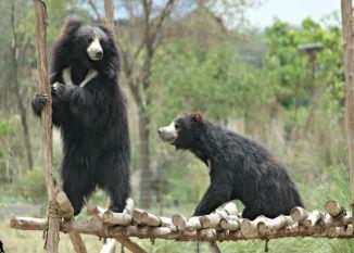 यहां दुनिया के सबसे बड़े भालू केन्द्र पर होगा अंतरराष्ट्रीय सम्मेलन