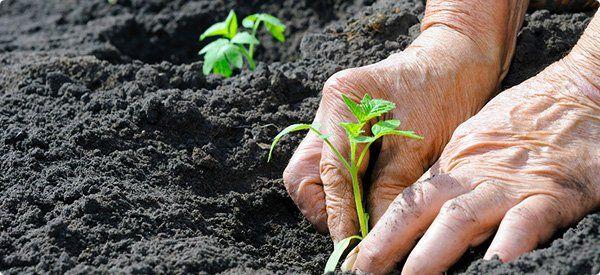 पौधे लगाने और उनके रखरखाव के लिए मिलेंगे दाम