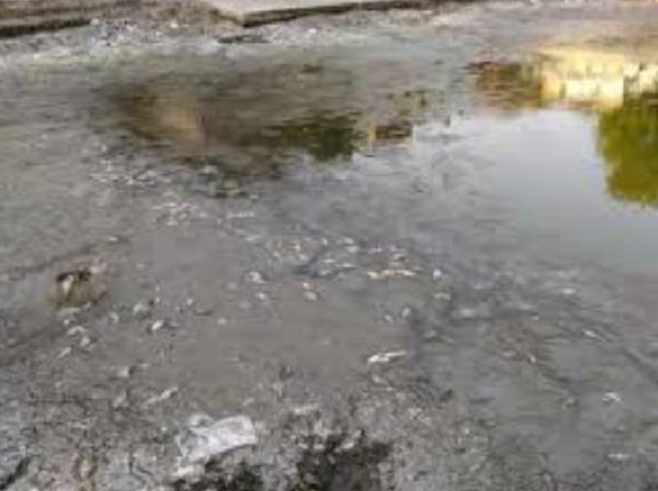 गर्मी से तालाब में मरी हजारों मछलियां