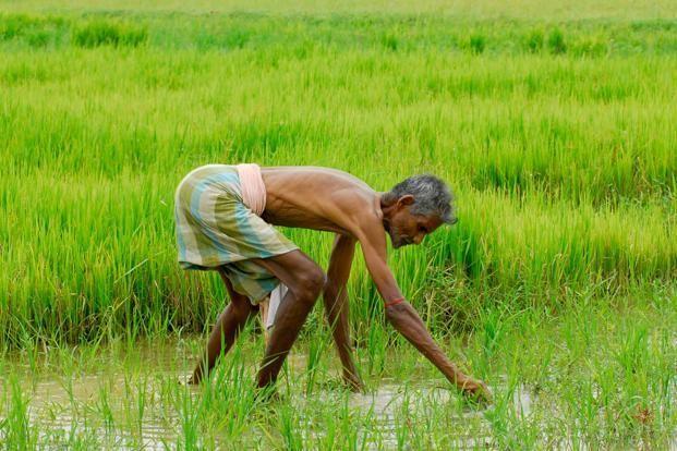 महाराष्ट्र: किसानों की आड़ में अमीरों को मिल रहा कर्जमाफी का लाभ