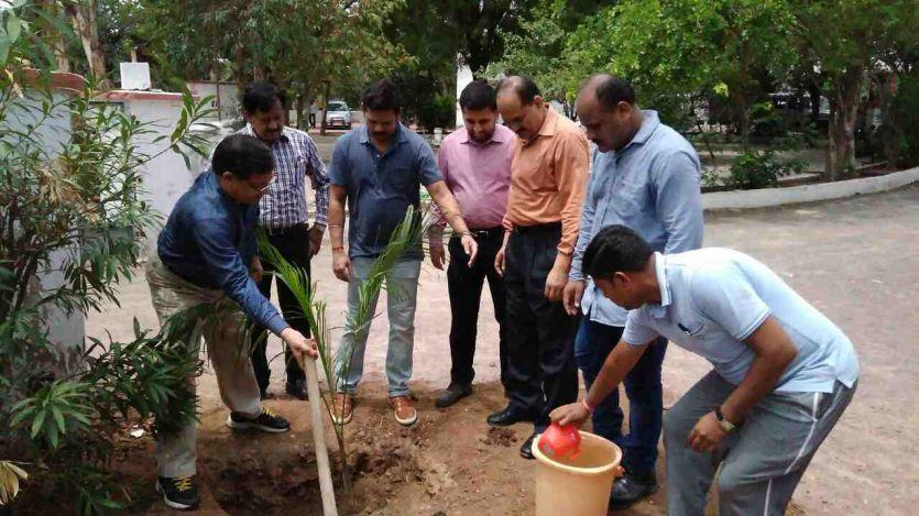 पर्यावरण संतुलन के लिए पौधरोपण जरूरी- कलेक्टर