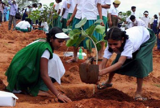 पर्यावरण संतुलन के लिए 25 लाख पौधे मुफ्त बांटेगी पंजाब सरकार