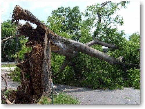 क्या पेड़ों के गिरने की वजह जलस्तर में कमी तो नहीं?