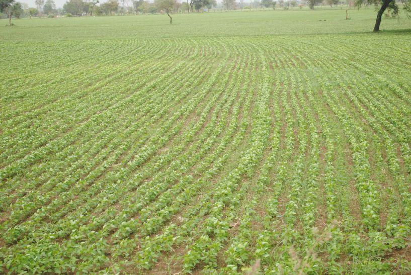 पानी की बेरुखी से कई खेत सूखे