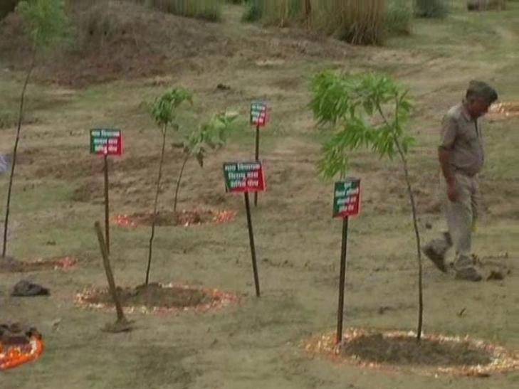 मंत्री को गुमराह कर दो- दो मीटर में लगा दिया गये दर्जन भर पौधे