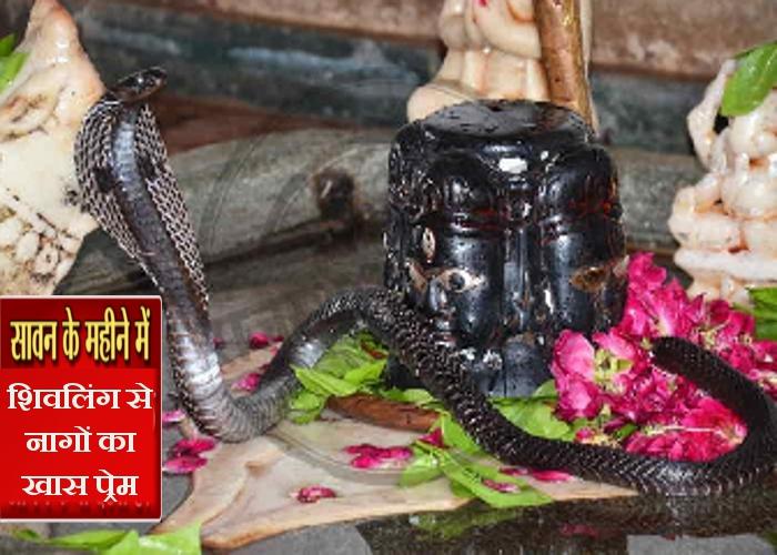 Videos: सावन के किसी एक सोमवार को यहां शिवलिंग पर जरूर आते हैं नागदेव, भगवान शिव के साथ नागदेवों ये 3 वीडियो देखकर आप भी चौंक जाएंगे