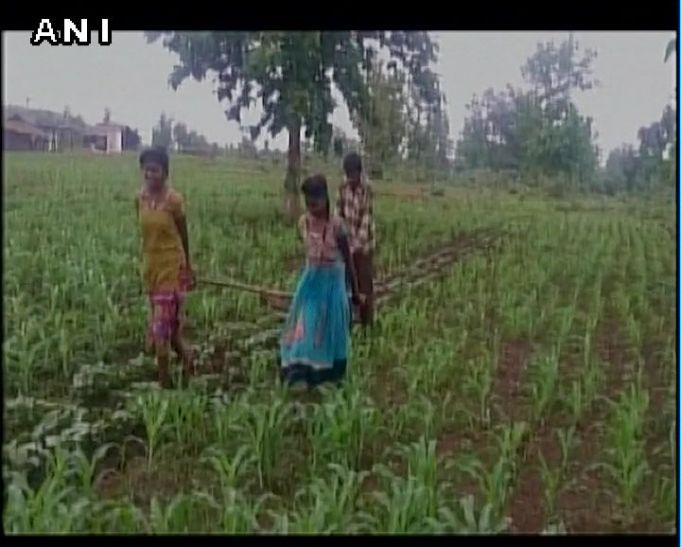 मध्य प्रदेश: बैल खरीदने के पैसे नहीं, इसलिए किसान ने बेटियों से खिंचवाया हल