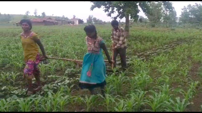कर्नाटक के मंत्री ने बेटियों को बैलों की जगह खेत में जोतने वाले किसान को भेजे 50 हजार रुपए