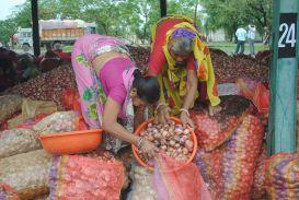 तीन सप्ताह में खराब हो गई किसानों से खरीदी गई लाखों की प्याज