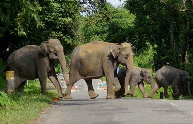रजगामार खदान के समीप पहुंचा 34 हाथियों का दल, घंटे भर रूके फिर वापस डेंगुरडीह की ओर मुड़े