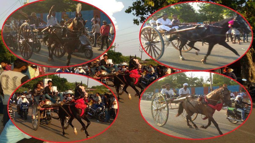 इलाहाबाद में हुई यूपी की सबसे बड़ी इक्का दौड़, महोबा का घोड़ा बना सुल्तान