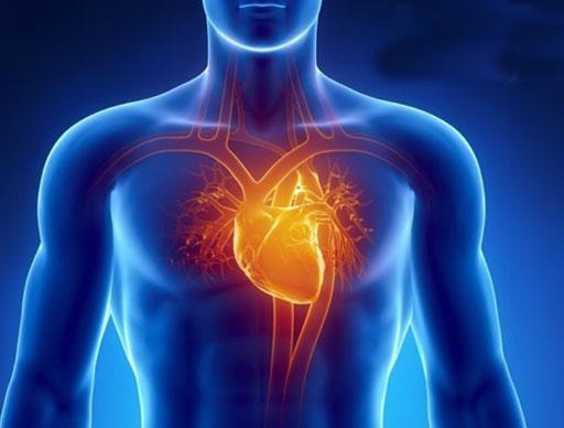 Dil kis side hota hai- शरीर में इस जगह होता है दिल, जानिए और भी कई फैक्ट्स