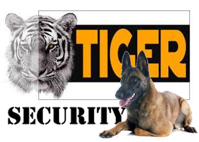 अमेरिकी राष्ट्रपति ट्रंप की सुरक्षा करने वाला डॉग बना कान्हा के बाघका बॉडीगॉर्ड