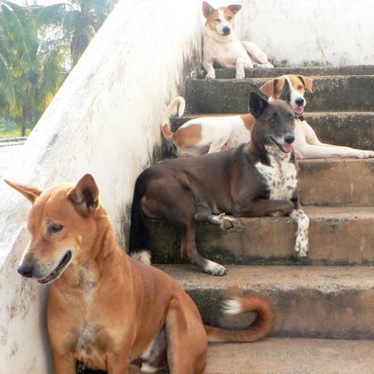 रामनाथ कोविंद के साथ कट्टी, किसमिस, कालू और लिली भी जाएंगे राष्ट्रपति भवन