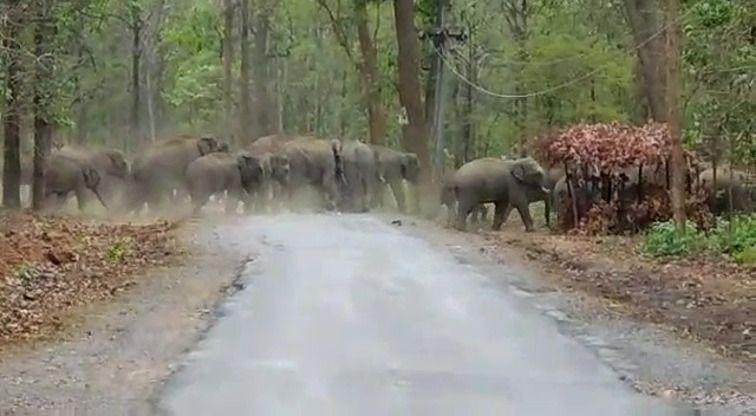 हाथियों का इतना बड़ा दल देखकर चकरा जाएगा माथा, वन विभाग का आंकलन है केवल 34, देखिए वीडियो