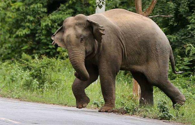 दंतैल को देख वाहन छोड़ भागा चालक पीडीएस के चावल से हाथी ने मिटायी भूख