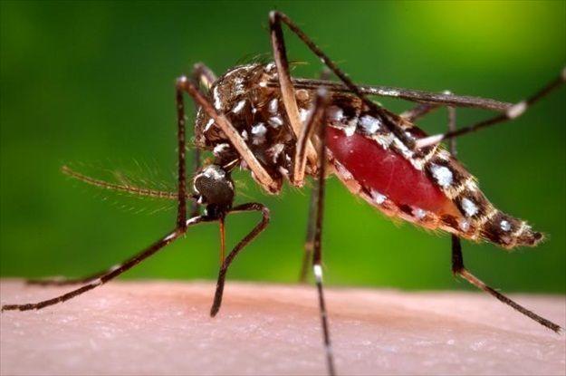 मलेरिया मच्छरों को मारने के लिए खिलाया जाएगा केक