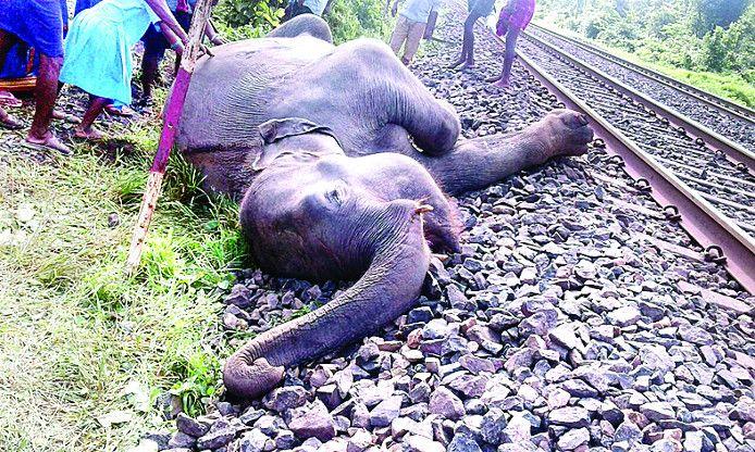रेलवे ट्रैक पार करते समय इंजन की चपेट में आया हाथी, मौत