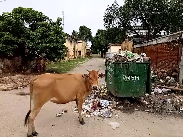 दम तोड़ता नजर आ रहा है स्वच्छता अभियान, 15 दिनों से शहर में फैला है कूड़े का अंबार