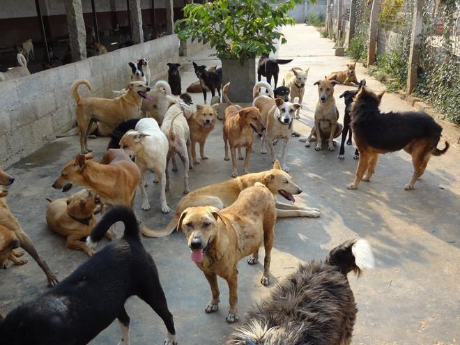 आवारा कुत्तों को रोटी देने के स्थान कॉलोनियों में सुनिश्चित हों- कोर्ट