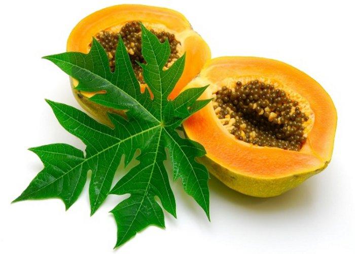 papaya leaves க்கான பட முடிவு