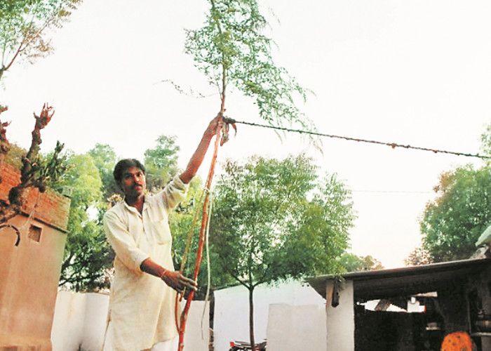 कौतूहल बना 17 फीट लम्बा बथुआ का पौधा