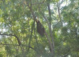 हाइवे पर अचानक मधुमक्खियों ने किया हमला, 17 राहगीर जख्मी