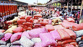 garlic Selling: दोनों मंडियों में एक दाम बिका लहसुन