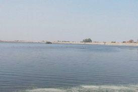 किशोरसागर तालाब में अब प्रवासी पक्षियों का डेरा