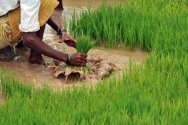 खेती-किसानी की योजनाओं में कटौती क्यों?