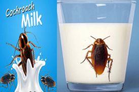 चौंक गए ना! अब बाजारों में बिकेगा 'कॉक्रोच का दूध'