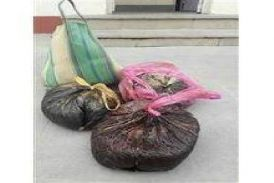 डबोक-मावली मार्ग पर एक लावारिस कार में मिली आठ किलो अफीम, पुलिस के उड़े होश