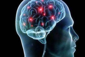 दिमाग में भी होता डिलीट बटन, न्यूरोसाइंस में सिनैप्टिकल प्रूनिंग कहते हैं इसे