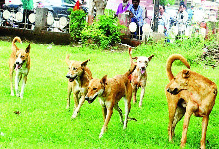 गलती से कुत्ते का जूठा पी लिया, चार बच्चों सहित 9 बीमार