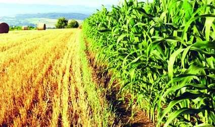 कृषि क्षेत्र में रोजगार के बढ़ रहे अवसर