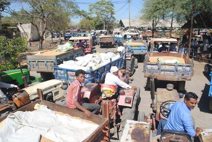 तीन दिन बाद खुली मंडी में तीन सौ रुपए तक गिर गए गेहूं के दाम