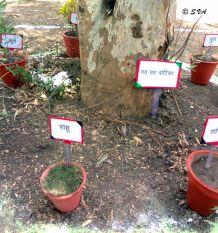 जानिए, पौधों का किस्मत कनेक्शन, सुधरेगी ग्रहों की दशा